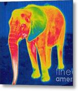 Thermogram Of An Elephant Metal Print