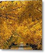 Trees In Autumn Metal Print