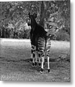 Two Stripes In Black And White Metal Print