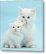 White Kittens Metal Print