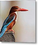 White-throated Kingfisher Metal Print