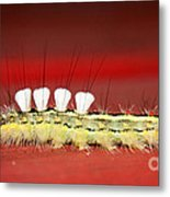 White Tussock Caterpillar Metal Print