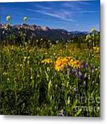 Wildflower Meadows And The Anthracite Range Metal Print