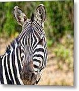 Zebras In The Masai Mara Metal Print