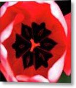 2012 Tulips 03 Metal Print