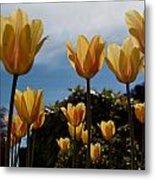 2012 Tulips 06 Metal Print