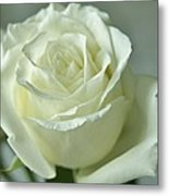 Rose For You Metal Print