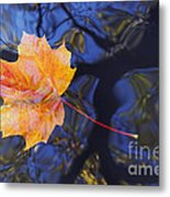 Autumn Leaf On The Water Metal Print