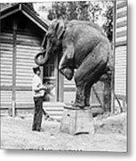 Bill Snyder, Elephant Trainer Metal Print by Everett