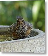 Bird Bath Fun Time Metal Print