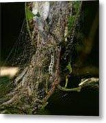 Bird-cherry Ermine Caterpillars Metal Print