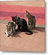 3 Cats Looking Pensive Metal Print