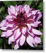 Dahlia Named Lauren Michelle Metal Print