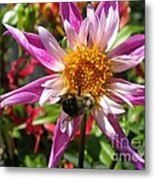 Dahlia Named Lorona Dawn Metal Print