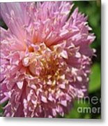 Dahlia Named Siemen Doorenbosch Metal Print