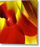 Dendribium Malone Or Hope Orchid Flower Metal Print