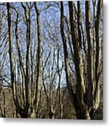 Epping Forest Metal Print