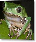 Giant Monkey Frog Metal Print
