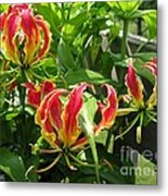 Gloriosa Named Rothschildiana Metal Print