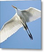 Great White Egret In Flight Metal Print