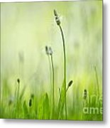 Green Grass Metal Print