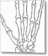 Hand And Wrist Bones Metal Print