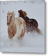 Heading For The Barn Metal Print