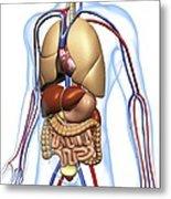 Human Anatomy, Artwork Metal Print