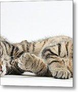 Kitten Companions Metal Print