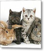 Kittens And Rabbits Metal Print