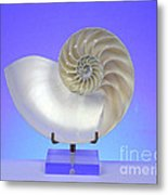 Logarithmic Spiral Metal Print by Photo Researchers, Inc.