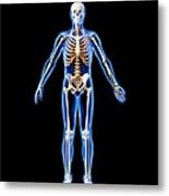 Male Skeleton, Artwork Metal Print