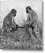3 Monkeys Hey Its Not A Wig Metal Print