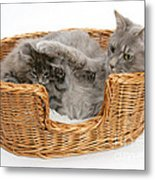 Mother Cat With Kitten Metal Print