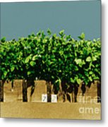 Photoperiodicity In Soybean Plants Metal Print