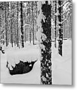 Pine Forest In January Metal Print