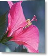 Pink, Blue And Green Metal Print