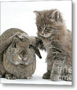 Rabbit And Kitten Metal Print
