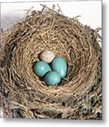 Robins Nest And Cowbird Egg Metal Print