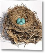 Robins Nest With Eggs Metal Print