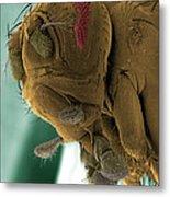 Sem Of A Mutant Fruit Fly Metal Print