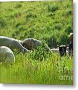 Shepherd Metal Print