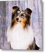 Shetland Sheepdog Portrait Of A Dog Metal Print