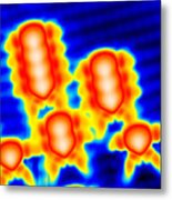 Spintronics Research, Stm Metal Print by Drs A. Yazdani & D.j. Hornbaker