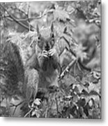 Squirrel Dinner Metal Print