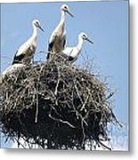 3 Storks In The Nest. Lithuania Metal Print