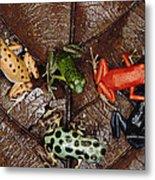 Strawberry Poison Dart Frog Dendrobates Metal Print