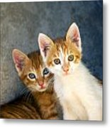 Sweet Cats Metal Print