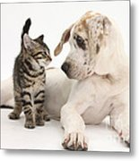 Tabby Kitten & Great Dane Pup Metal Print