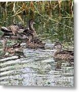 Teal Ducks Metal Print